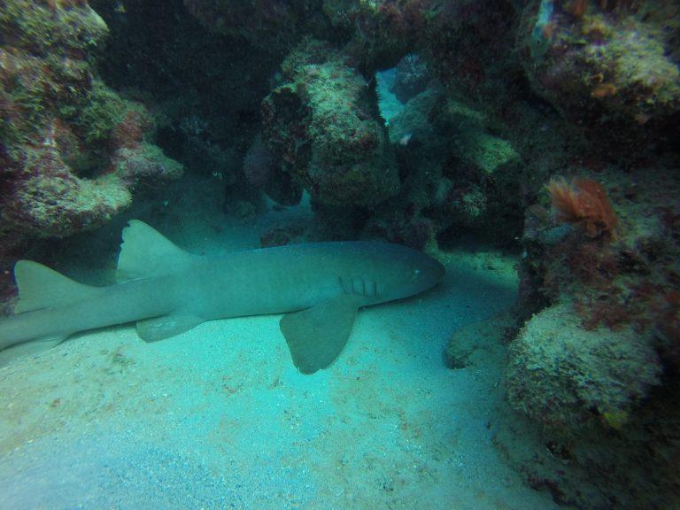 Shark Reef – Gallery